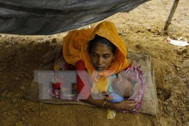 Australia ofrece asistencia humanitaria a Rohingyas en Myanmar hinh anh 1