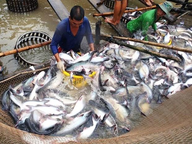 Reportan fuerte baja de exportaciones de pescado Tra vietnamita a Estados Unidos hinh anh 1