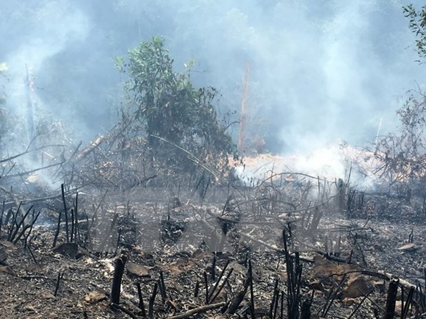 Indonesia impulsa en lucha contra incendios forestales hinh anh 1