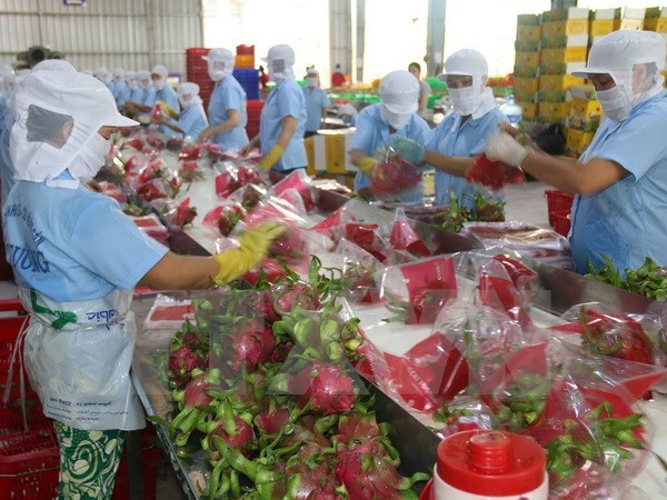 Vietnam envia primer lote de pitahaya a Australia hinh anh 1