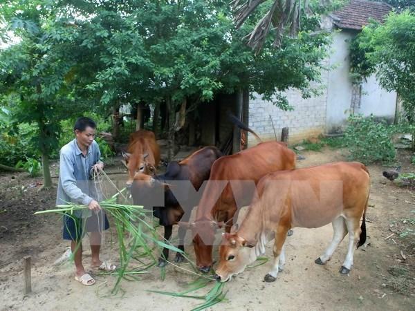 Localidades desfavorecidas en Vietnam se benefician de asistencia del gobierno hinh anh 1