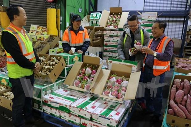 Primer lote de pitahaya vietnamita llega a mercados de Australia hinh anh 1