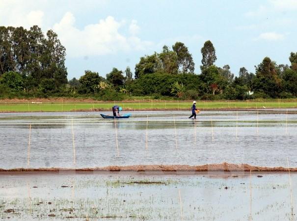 A debate en Vietnam proyecto de desarrollo integral del Delta del rio Mekong hinh anh 1