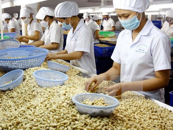Exportaciones vietnamitas de anacardo reportan 2,2 mil millones de dolares en ocho meses de 2017 hinh anh 1