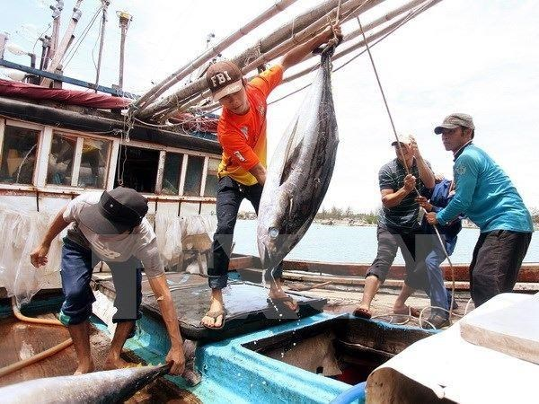 Aumentan valor de atun vietnamita en el mercado mediante la conexion en cadena hinh anh 1