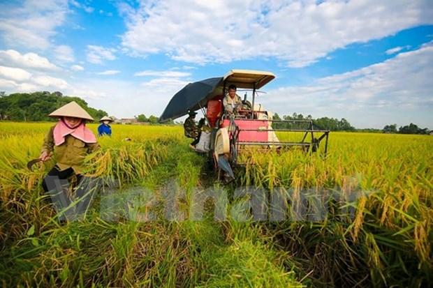 Vietnam y Alemania cooperan en formacion profesional de agricultores hinh anh 1