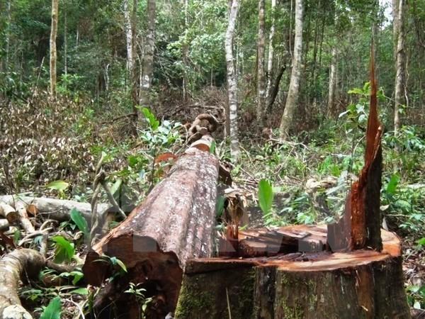 Provincia vietnamita de Bac Giang refuerza proteccion forestal hinh anh 1