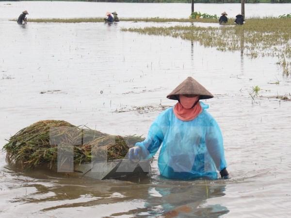 Vietnam se esfuerza en labores de prevencion y mitigacion de afectaciones de desastres naturales hinh anh 1