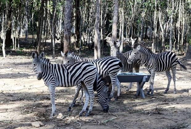 Provincia sudvietnamita de Dong Nai lanzara safari de vida silvestre hinh anh 1