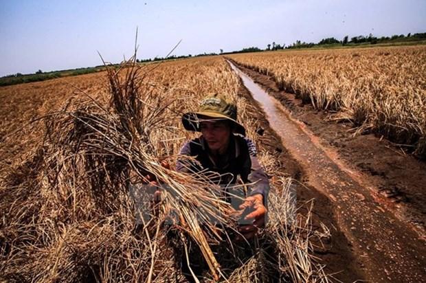Cambio climatico causara en Vietnam 250 mil muertes al ano hinh anh 1