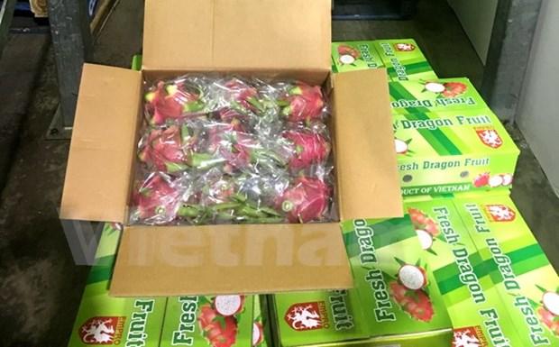 Pitahayas vietnamitas penetran en mercado de Australia Occidental hinh anh 1