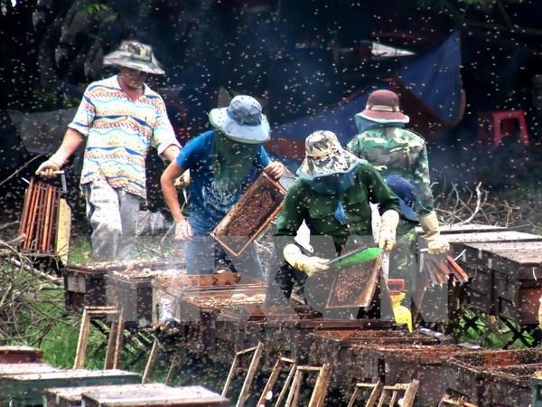 Vietnam busca impulsar exportacion de miel a Union Europea hinh anh 1