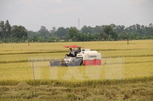 Tailandia busca dominar mercado de arroz de Hong Kong (China) hinh anh 1