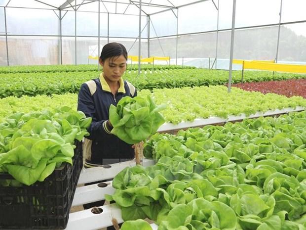 APEC 2017: Vietnam traza camino para desarrollo sostenible de agricultura de alta tecnologia hinh anh 1