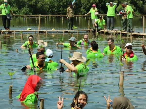 ASEAN por impulsar conservacion medioambiental mediante ampliacion de manglares hinh anh 1
