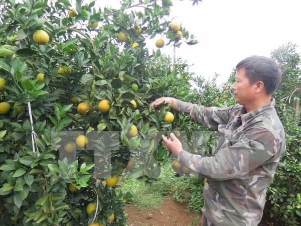 Vietnam y Belgica impulsan cooperacion en agricultura hinh anh 1