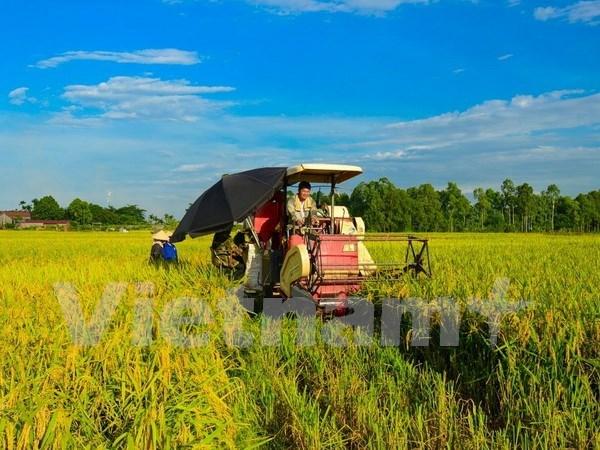 Vietnam por lograr en 2020 un crecimiento agricola de tres por ciento hinh anh 1