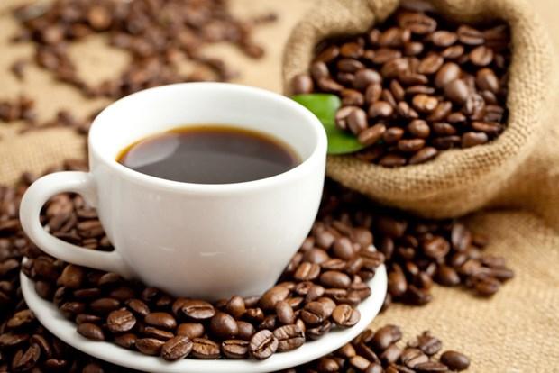 Vietnam busca ingresar fondo multimillonario en 2030 por exportaciones de cafe hinh anh 1