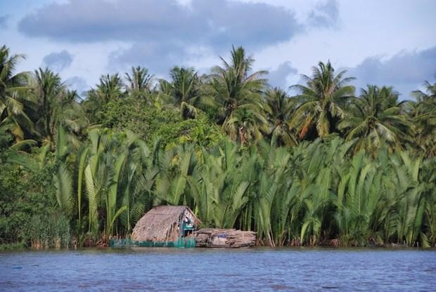 Ben Tre, la tierra de los cocoteros, busca atraer a mas turistas hinh anh 1