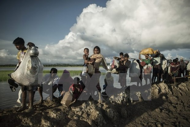 Bangladesh y Myanmar cooperan con agencia de ONU para refugiados para repatriacion de rohingyas hinh anh 1