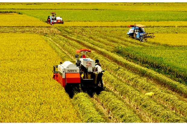 Provincias del Delta del Mekong de Vietnam e India amplian cooperacion agricola hinh anh 1