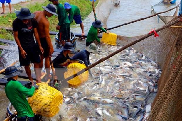 Vietnam busca impulsar exportaciones de pescado Tra a UE hinh anh 1