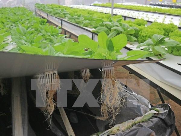 Empresa sudcoreana estudia invertir en agricultura en Vietnam hinh anh 1