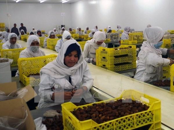 Argelia busca exportar datil a Vietnam hinh anh 1
