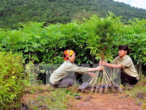 Plantan siete mil arboles en humedal de Lang Sen hinh anh 1