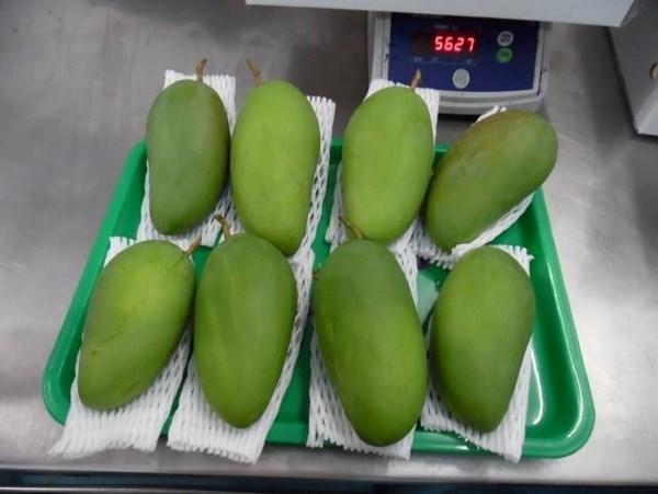Mango vietnamita sera introducido en el mercado estadounidense hinh anh 1