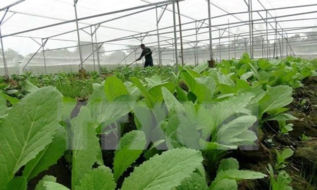 Vietnam adquiere experiencias de Japon en gestion agraria hinh anh 1