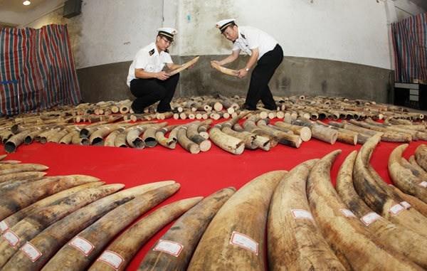 Policia de China confisca marfil contrabandeado a traves de frontera con Vietnam hinh anh 1