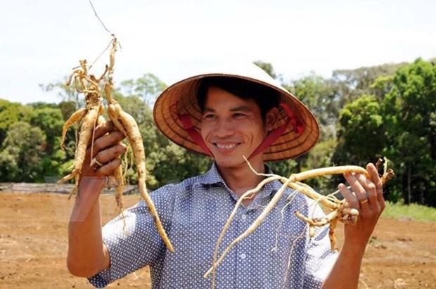 UE financia proyecto de gestion de plantas medicinales tradicionales en provincia vietnamita hinh anh 1