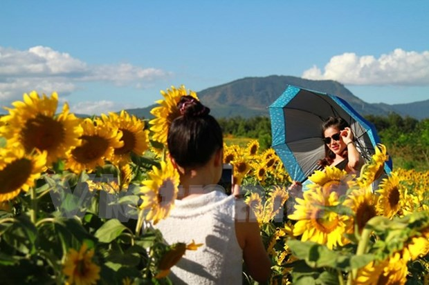 Promoveran productos agricolas y turisticos de Lam Dong en Festival de Flores Da Lat hinh anh 1