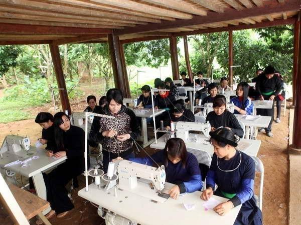 Opera con eficiencia 33 por ciento de cooperativas agricolas en Vietnam hinh anh 1