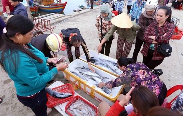 Vietnam despliega medidas urgentes en respuesta a advertencia de EC sobre pesca ilegal hinh anh 1