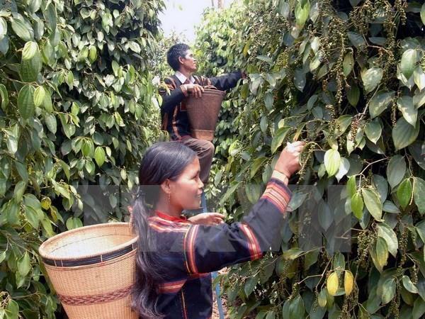 Altiplanicie Occidental de Vietnam por impulsar desarrollo socioeconomico hinh anh 1