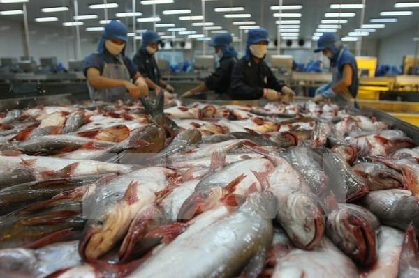 Venta de pescado Tra de Vietnam en 2017 logra resultado alentador hinh anh 1