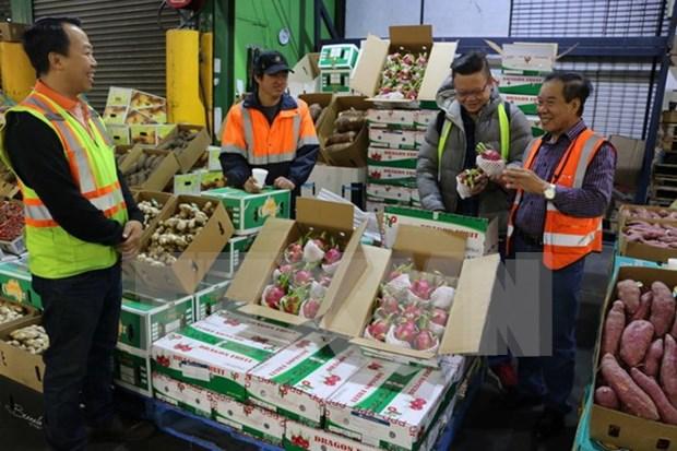 Vietnam ingresa 3,34 mil millones de dolares por exportaciones de frutas y verduras hinh anh 1