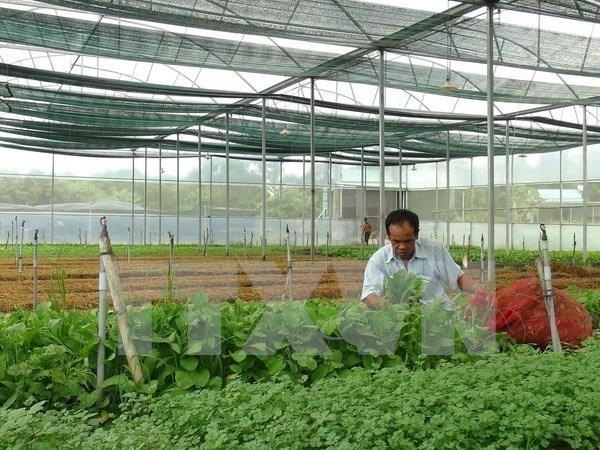 Vietnam coopera con Japon en mejoramiento de cadenas de produccion agricola limpia hinh anh 1