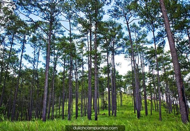 UE concede 3,3 millones de dolares a Camboya para proteccion forestal hinh anh 1