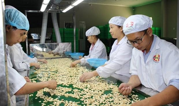 Vietnam ingresa en 2017 fondo multimillonario por exportaciones de anacardo hinh anh 1