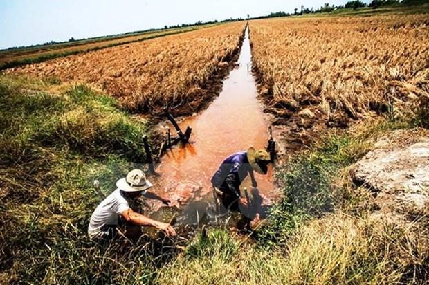 Buscan aumentar capacidad de adaptacion al cambio climatico en Delta del Mekong hinh anh 1