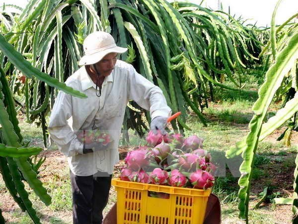 Valor de exportaciones vietnamitas de frutas y verduras alcanza nuevo record hinh anh 1