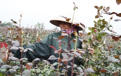 Hanoi reconoce otras ocho aldeas de oficios hinh anh 1