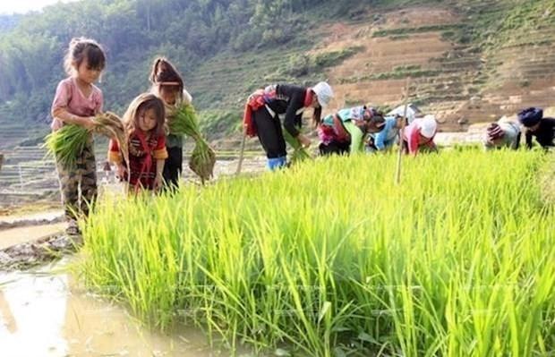 Vietnam aplica severas penas a empleadores de trabajadores infantiles hinh anh 1