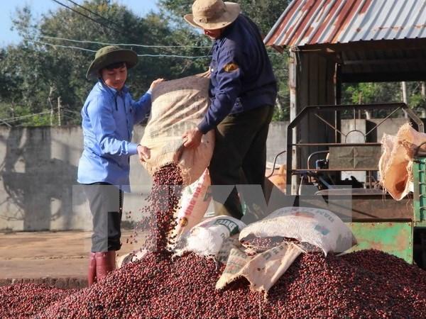 Empresas vietnamitas realizan inversiones millonarias en Laos y Camboya hinh anh 1