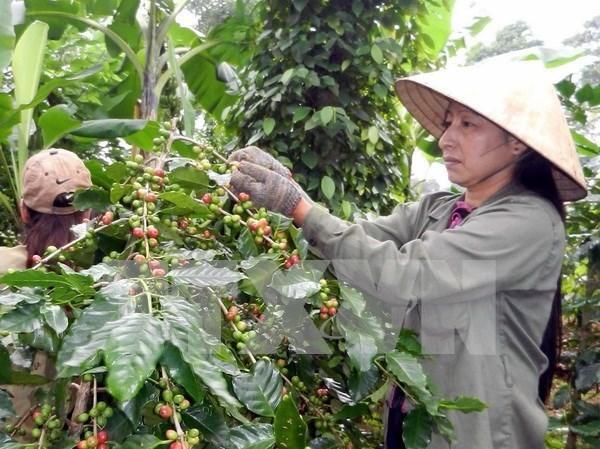Sector agricola de Vietnam planea nuevas metas para 2018 hinh anh 1