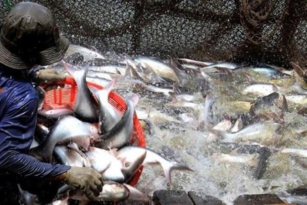 Vietnam exporta primer lote de productos acuicolas en 2018 hinh anh 1