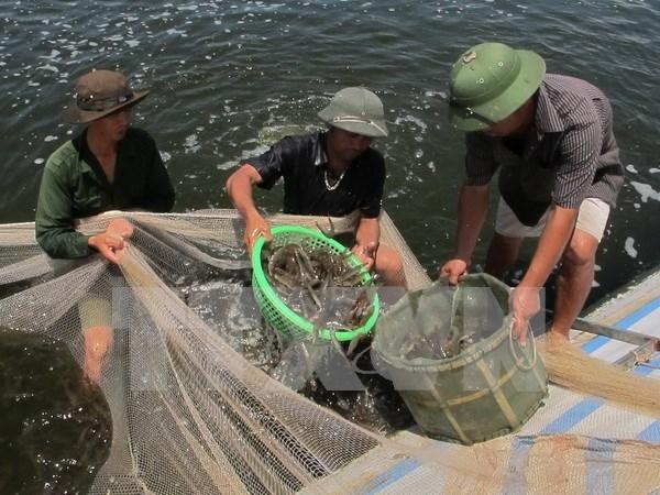 Provincia centrovietnamita presta gran atencion a desarrollo acuicola hinh anh 1